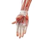 wrist02_1